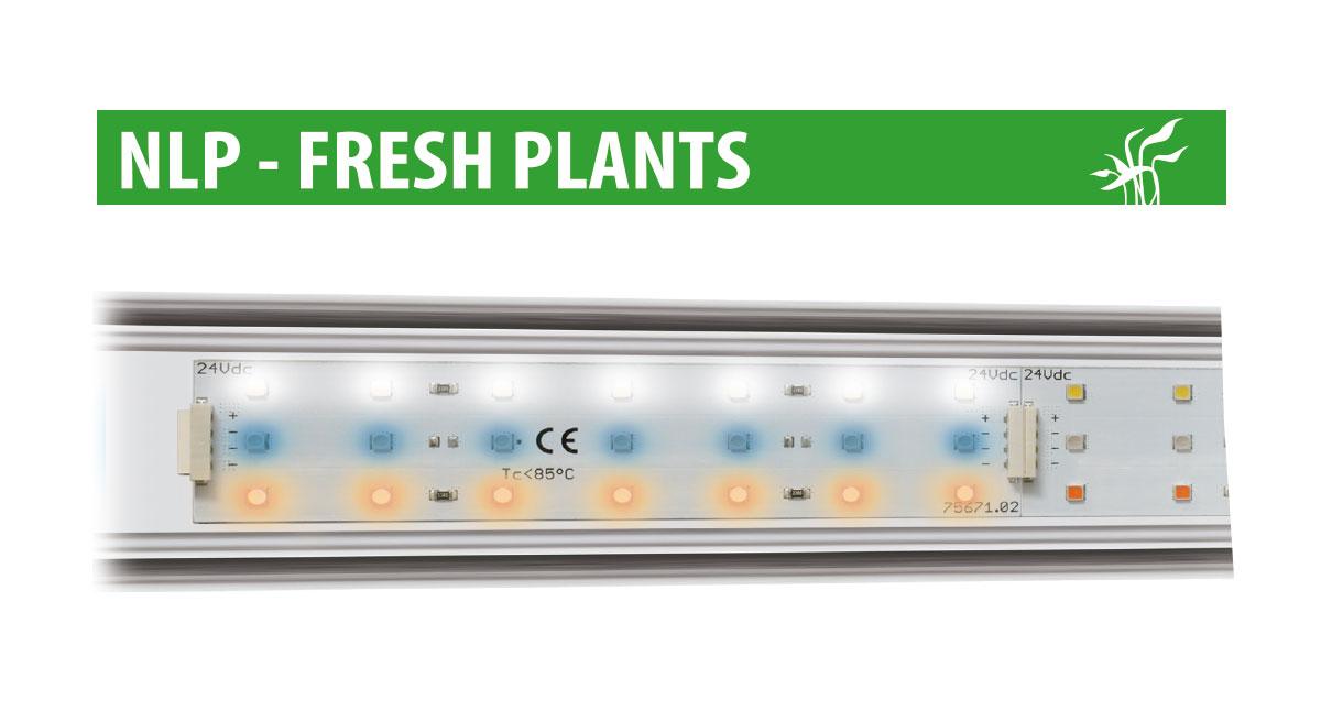 Newa led fresh plants newa eccellenza internazionale for Led alta efficienza